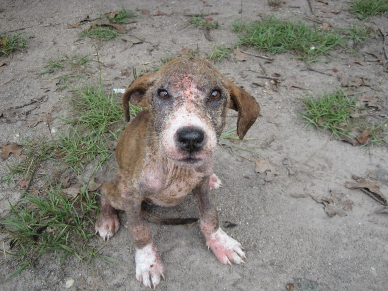 Puppy dog with mange named Pokey.