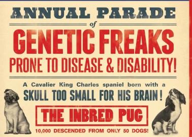New PETA 'Freak Show' Ad Shines the Spotlight on Crufts