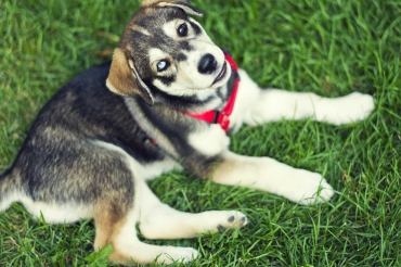Cute Puppy on Grass Outside