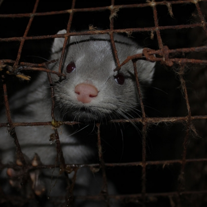 Cruelty Assured: The Truth About the Fur Trade