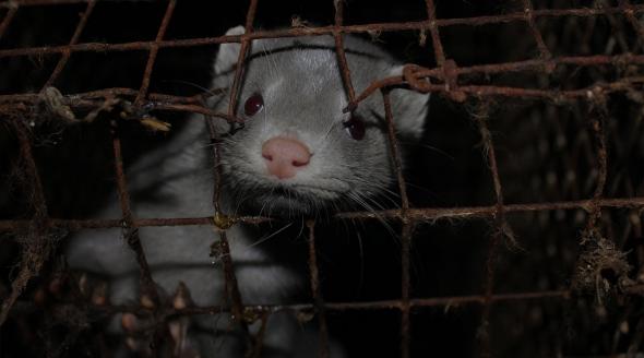 Cruelty Assured Fur Farm