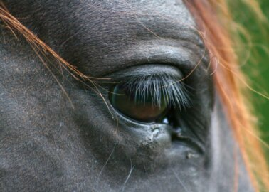 Total Grand National Death Toll Rises to Two Horses