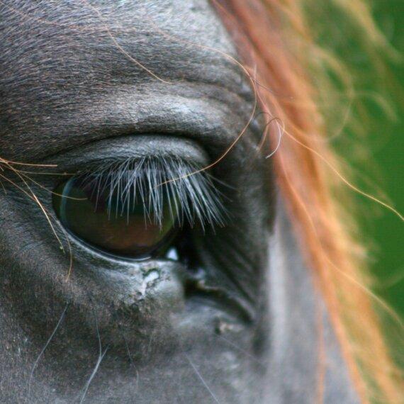 Horse Racing: Gambling on Animals' Lives