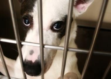 Top Dog Breeders Convicted of Cruelty