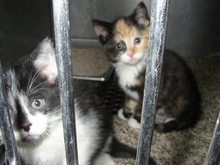 Kittens at shelter