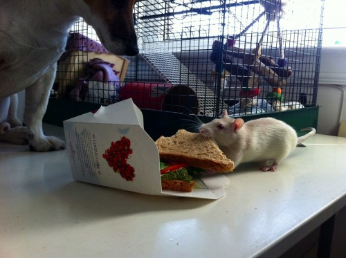 Vegan Pret a Manger Sandwich
