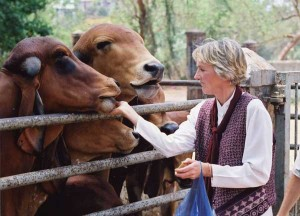 Ingrid with Indian Cows