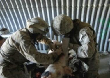 Success! US Military Takes a Huge Step Towards Ending Its War on Animals