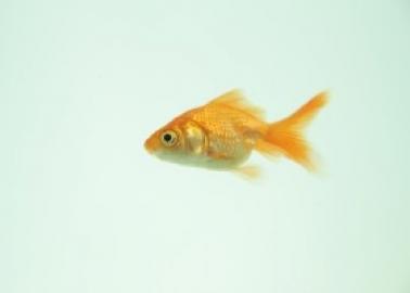 Standing Ovation for Trafalgar Studios' Decision to Stop Traumatising Goldfish in Tragedy