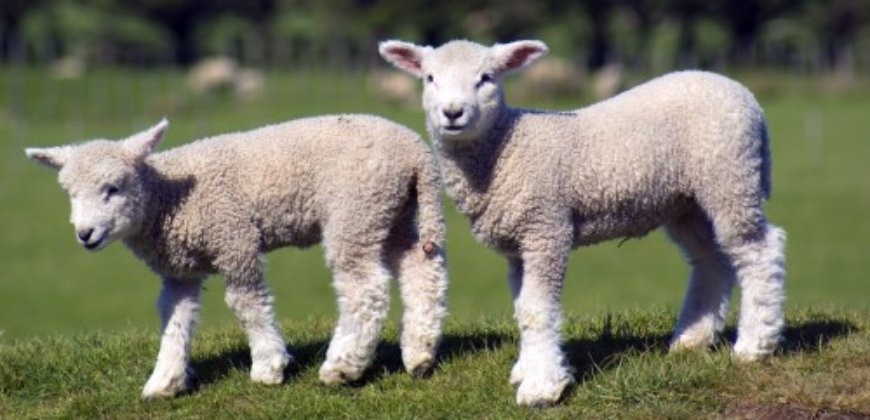 Victory! Boohoo Becomes First Major Fashion Retailer to Ban Wool