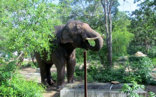 Sunder drinks water in his new home