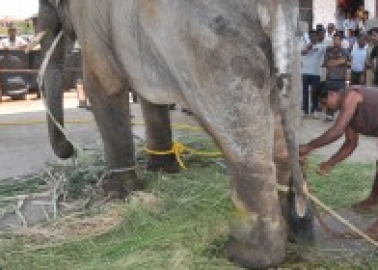 Heartbreaking Pics Show Sunder Is Still Suffering While He Waits to Be Moved