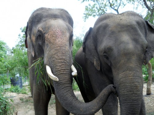 sunder-kissing-lakshmi