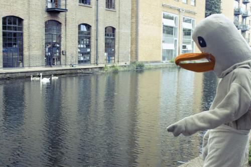 F&M Goose Swim