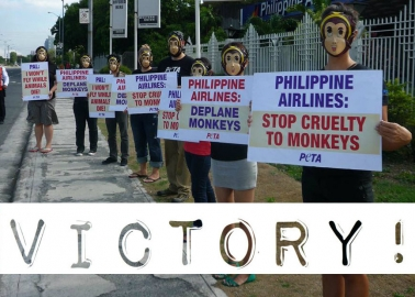 Success! Philippine Airlines Stops Shipping Primates to Labs