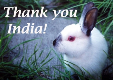 Good News! India Bans Import of Cosmetics Tested on Animals