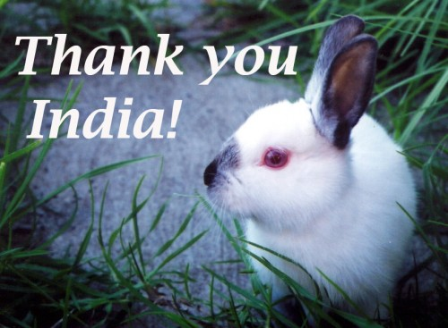 Animal testing for cosmetics banned in India