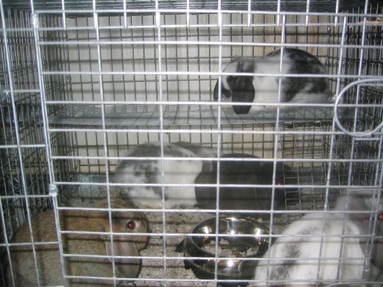 PETA Rabbits