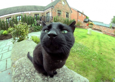 Cheshire Cat Escapes Snare