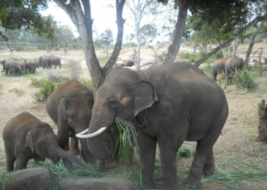 PETA India Turns Sunder's Home Into Free-Roaming, Forested Sanctuary