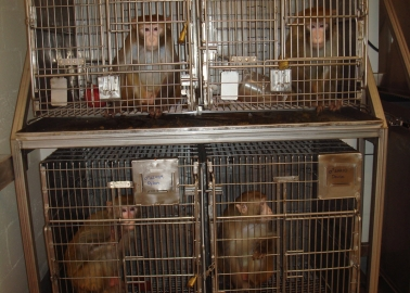 Founder of Energy Firm Calls On Last Remaining Airline to Stop Transporting Primates to Labs