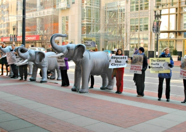 Victory! US Circus Company Ringling to Phase Out Elephant Acts