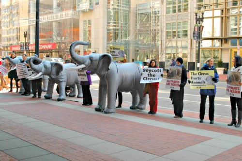 DC-Ringling-Bros.-Demonstration-with-Ingrid-Newkirk