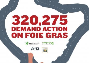 Foie Gras: We've Taken Your 320,000 Signatures to the Top!