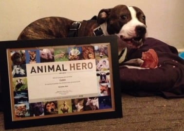 Hero: This Dog Saved His Guardian From Drowning in a Freezing Scottish River