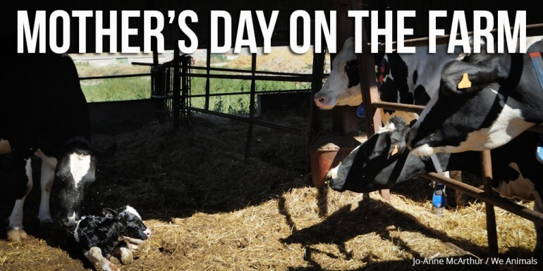 Mothers-Day-Farm_We-Animals