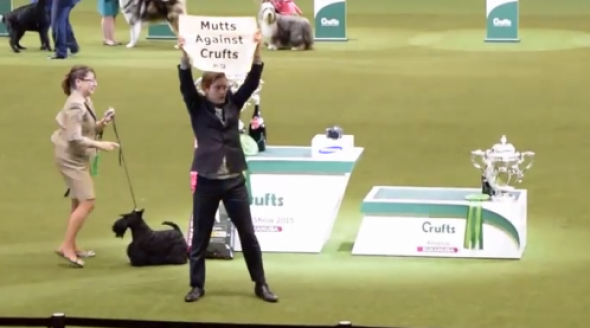 Mutts-against-Crufts-500x360.png
