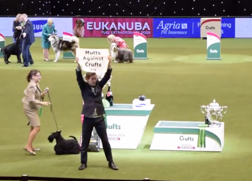 Mutts against Crufts!