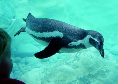 Kirsty Gallacher Calls On Edinburgh Zoo to Cancel Late-Night Parties