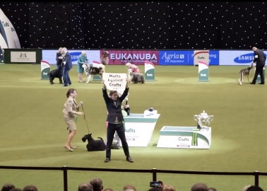 Activist Flies the Flag for Mutts at Crufts 'Best in Show'!