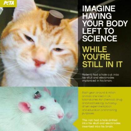 animal-testing-leaflet-page-001