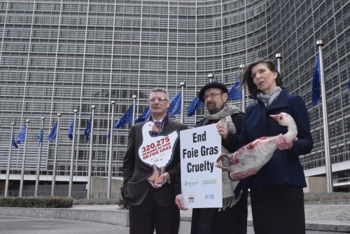 MEPs support calls for a crackdown on cruel foie gras production