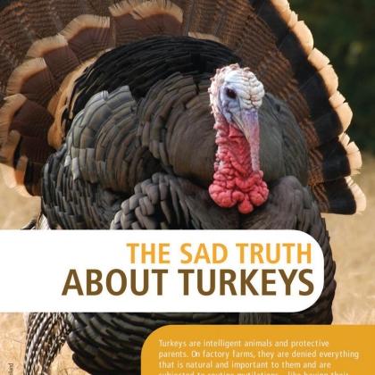 Turkeys Leaflet Page 1