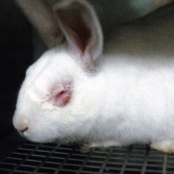 Cosmetics and Animal Testing