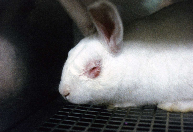 Animal testing for cosmetics is wrong
