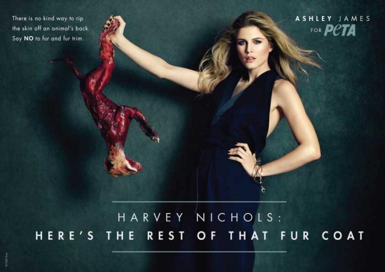 Ashley James ad for web