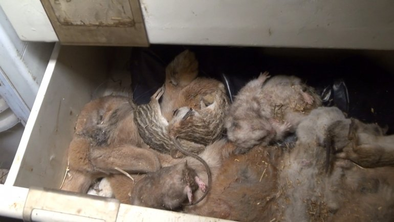 NL pet trade_dead animals