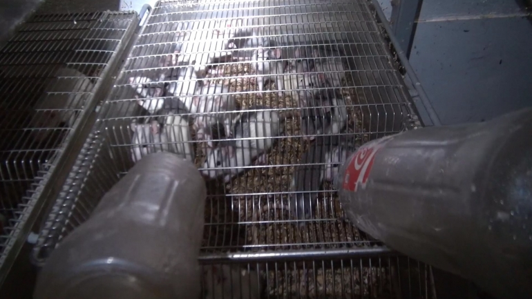 NL pet trade_mice in crowded cage