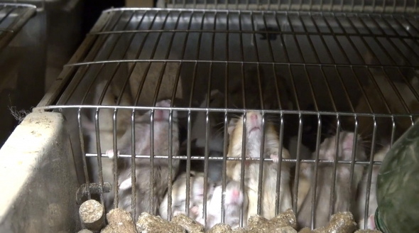 NL pet trade_mouse cage bars