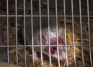 The Heartbreaking Story of How Animals Are Bred for the European Pet Trade