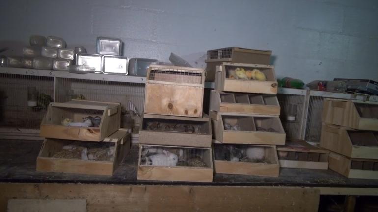 NL pet trade_piles of crates