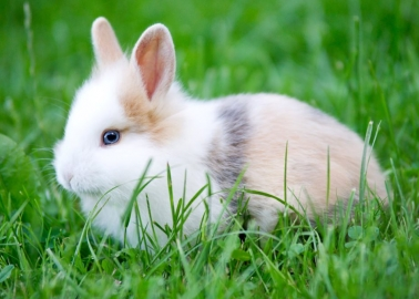 Good News From New Zealand – Ban on Animal Testing for Cosmetics a Step Closer!