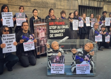 Air France Faces Awkward Questions About Cruelty to Monkeys at Its Own Annual Meeting