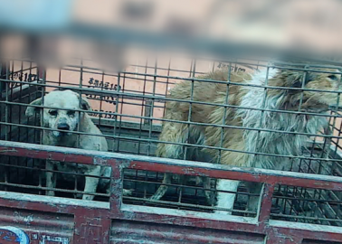 We're Calling On the EU to Ban Dog Leather