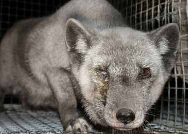 This Company Got in Trouble With Advertising Standards for Claiming Fur Is Ethical