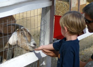 5 Reasons That Petting Zoos Are Being Cancelled Across the Country